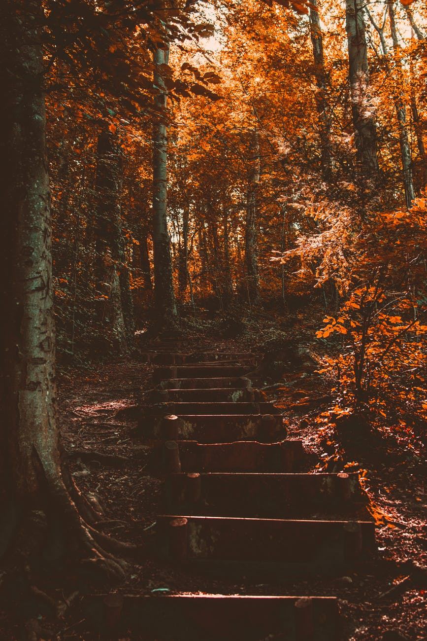 brown trees near stairs